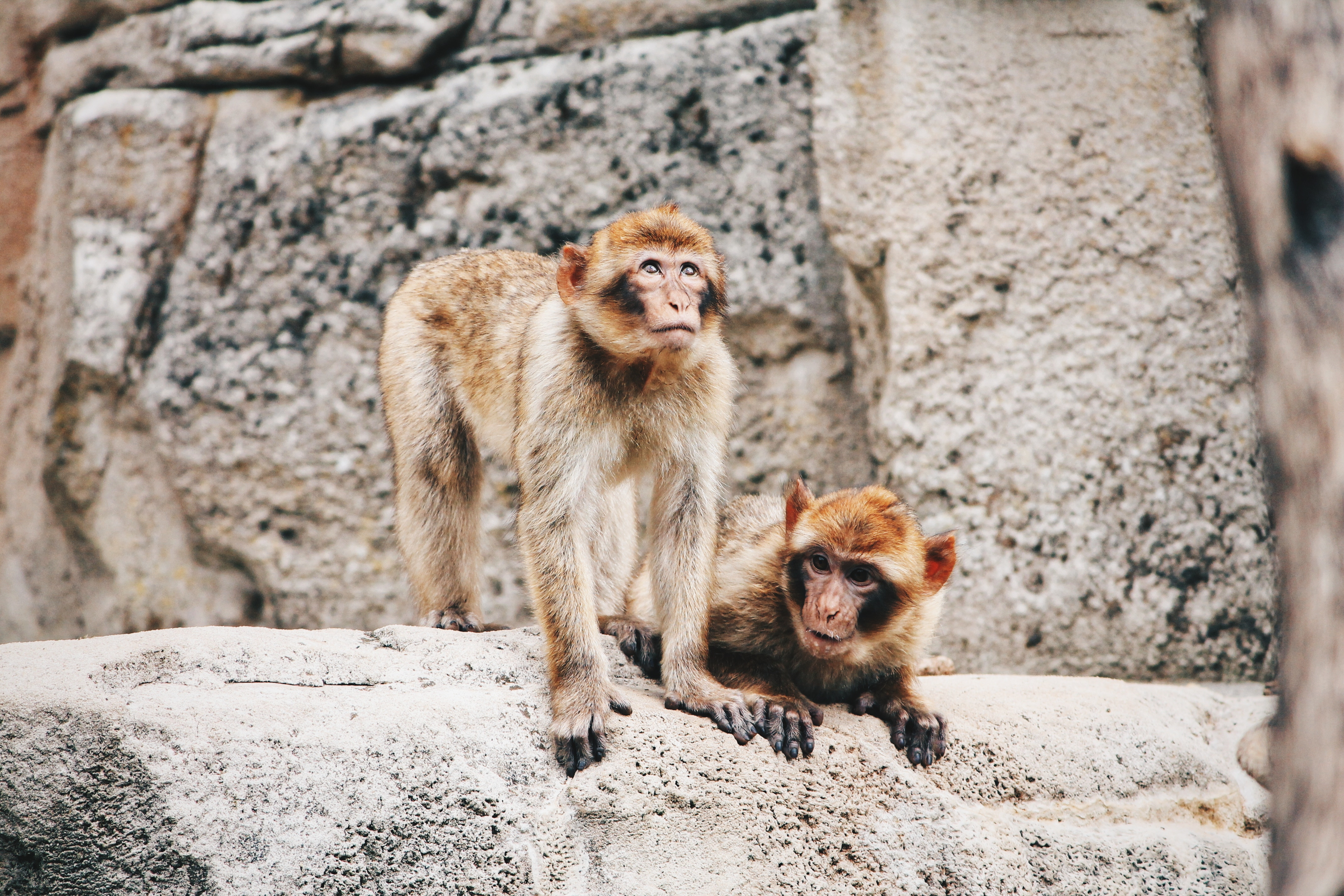Rabies - It's Not Just Science Fiction - TravelSafe