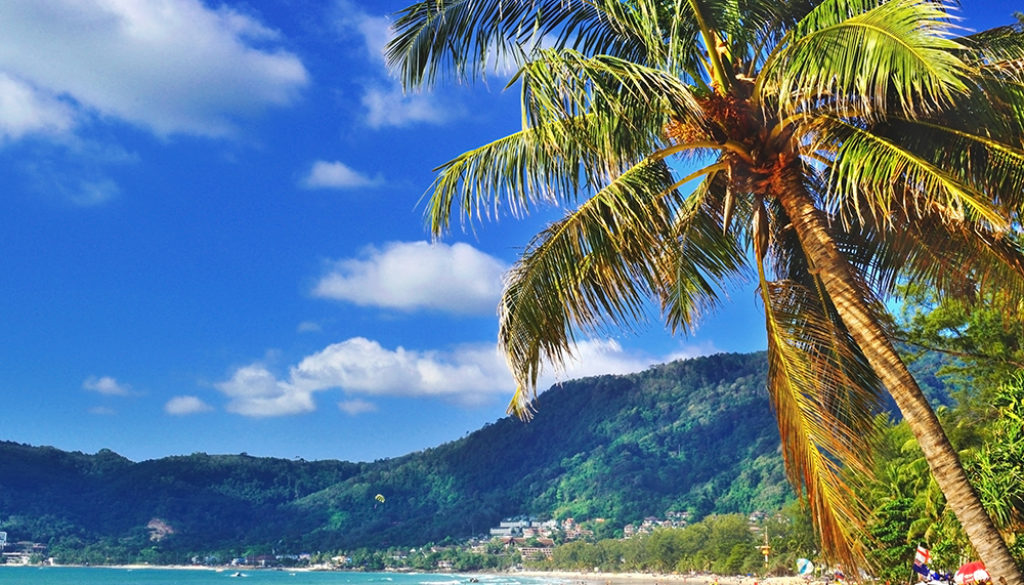 Patong beach with coconut trees