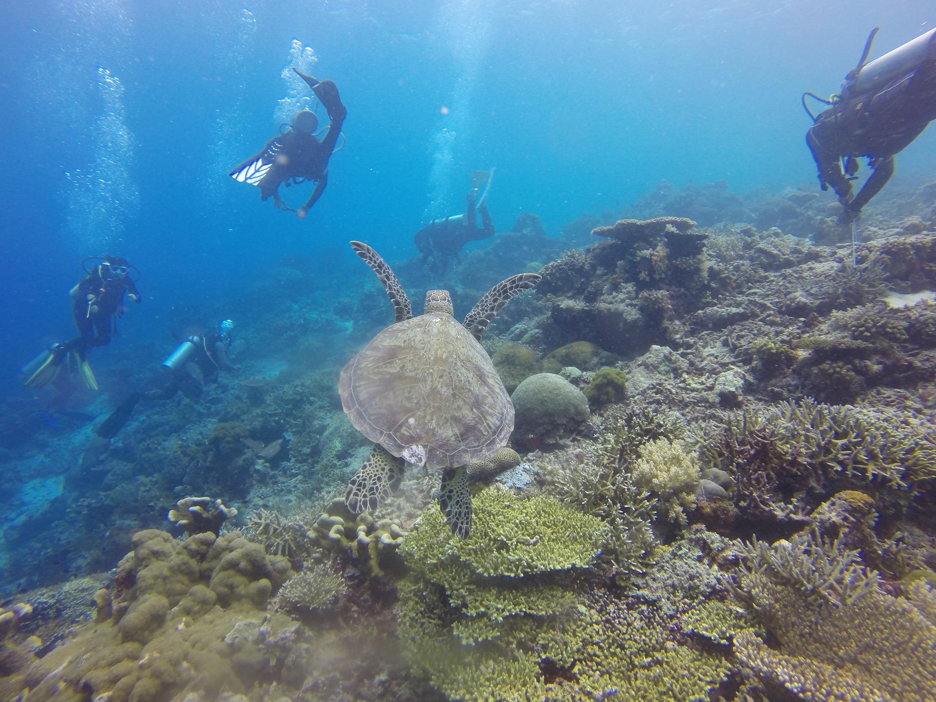 scuba-diving-1300848_1920