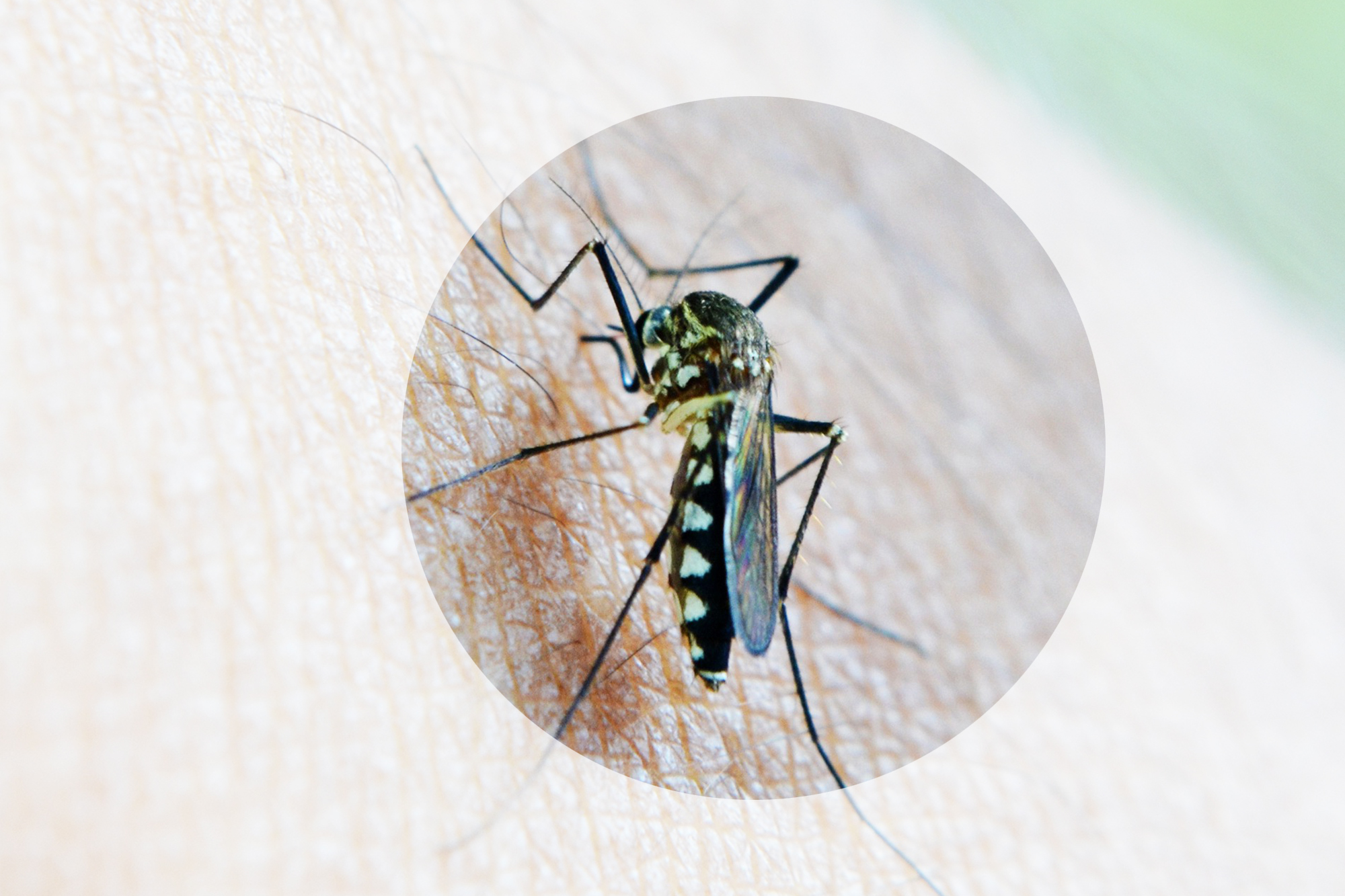 how to choose an insect repellent for travel