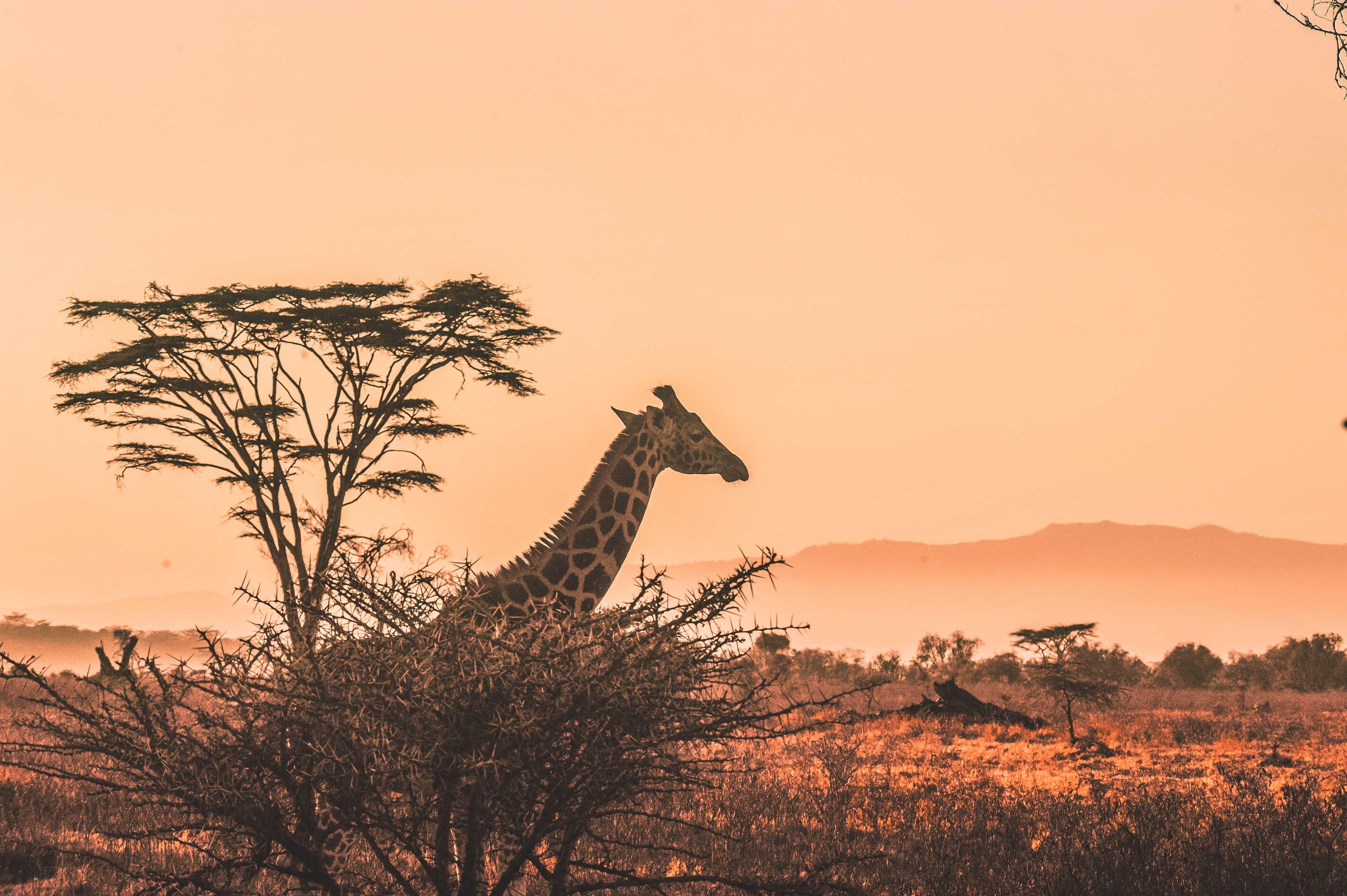 africa (10)