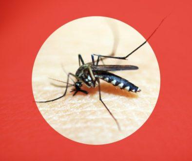 Dengue fever, TravelSafe, travel clinic