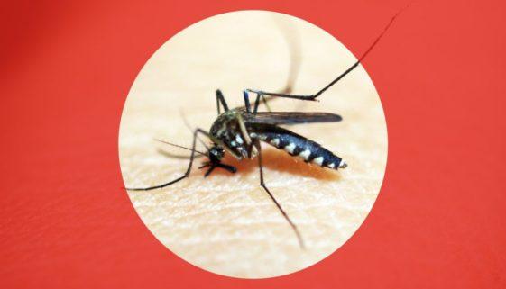 26-3 Time to Prepare Be Dengue Aware