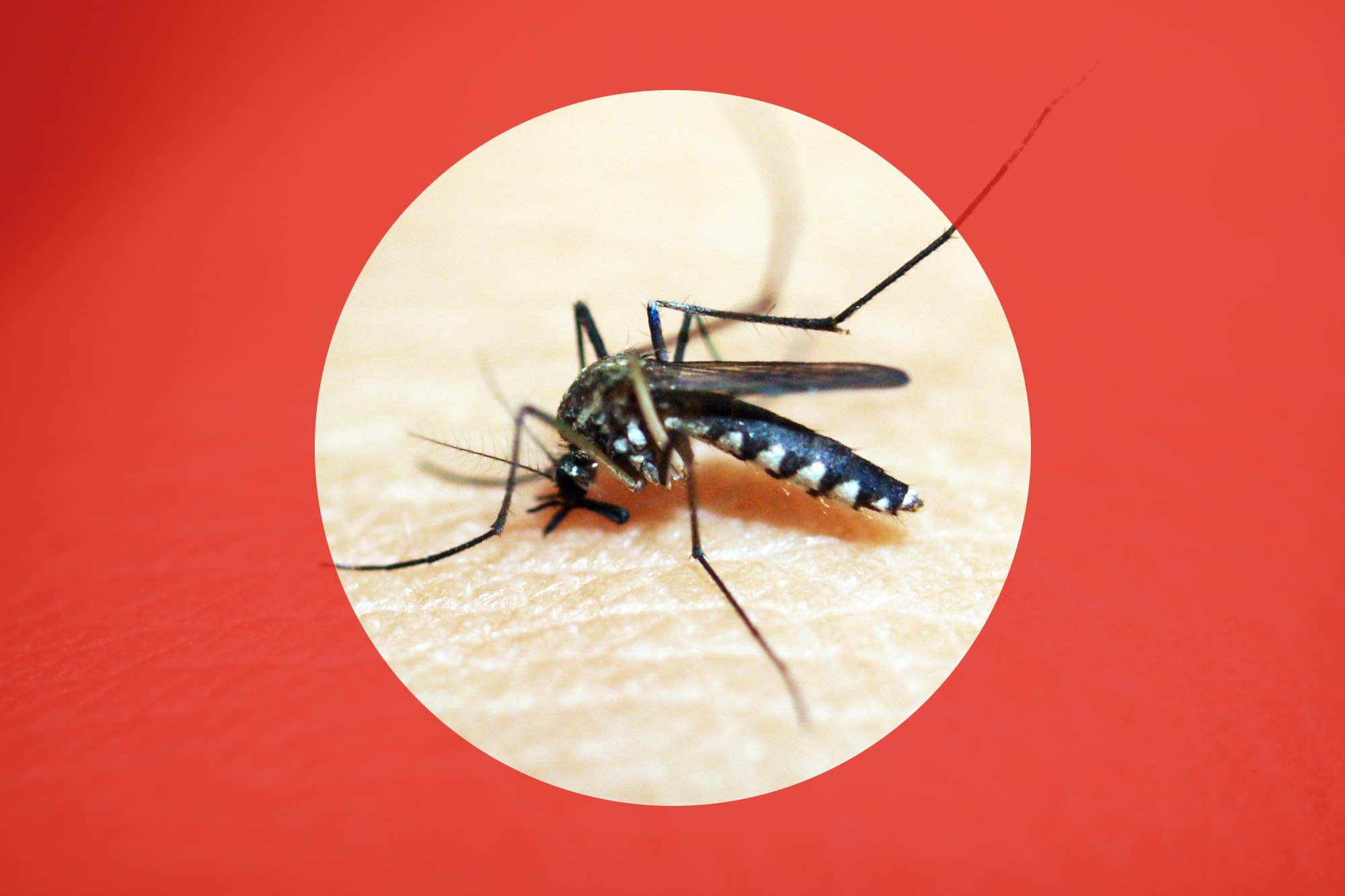 Dengue fever, TravelSafe, travel clinic