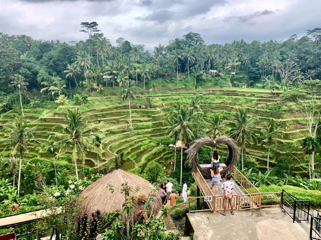 Tegalalang Rice Field, Ubud