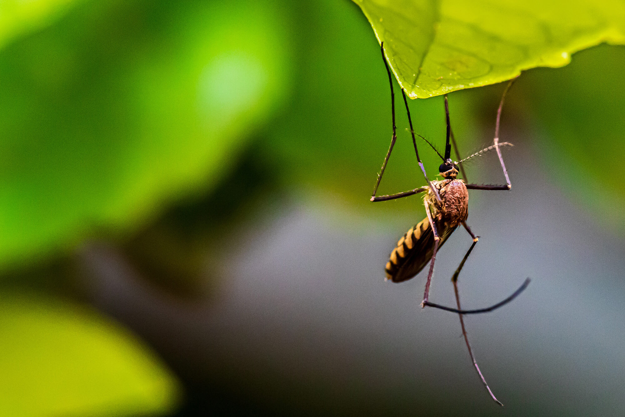 mosquitoes, ants, ticks, bees and wasps prevention repellent