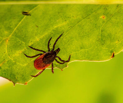 Lyme Disease on the Rise in Canada
